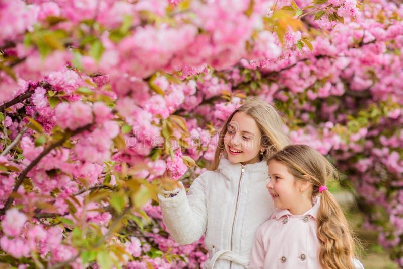 Meisjes die dichtbij sakura stellen Verloren in bloesem Jonge geitjes op roze bloemen van de achtergrond van de sakuraboom Jonge  stock foto's