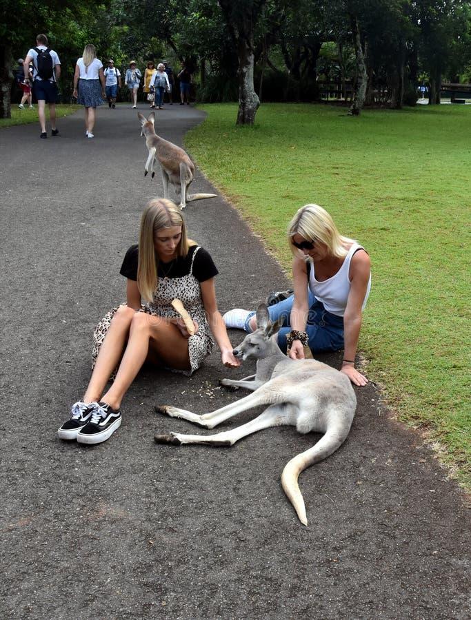 Meisjes die kangoeroes in de Dierentuin van Australië voeden stock fotografie