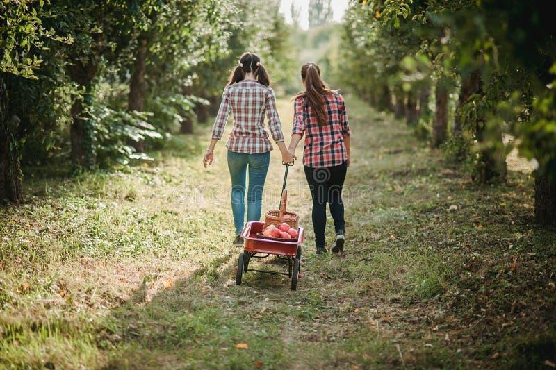 Meisjes met Apple in de Apple-Boomgaard royalty-vrije stock fotografie