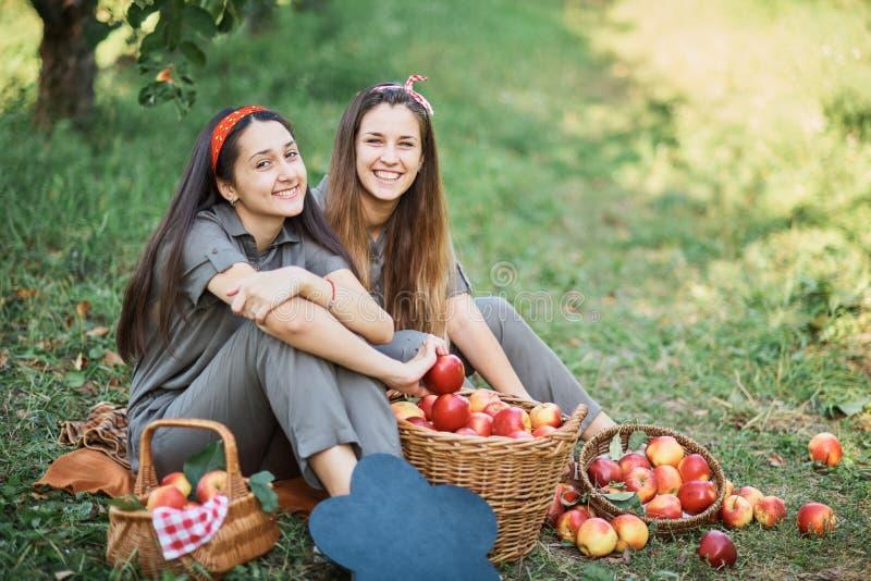 Meisjes met Apple in de Apple-Boomgaard Mooie zusters met Organisch Apple in de Boomgaard Het concept van de oogst De herfst verl royalty-vrije stock fotografie