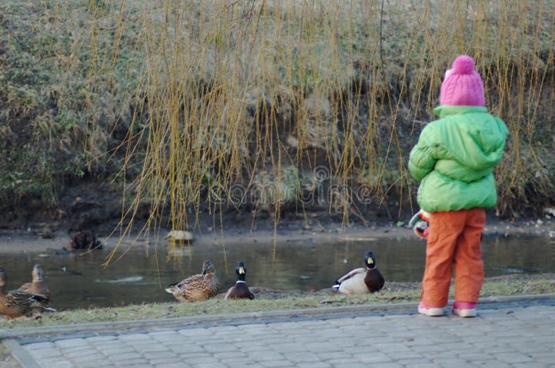 Meisjes voedende eend op rivier stock afbeelding