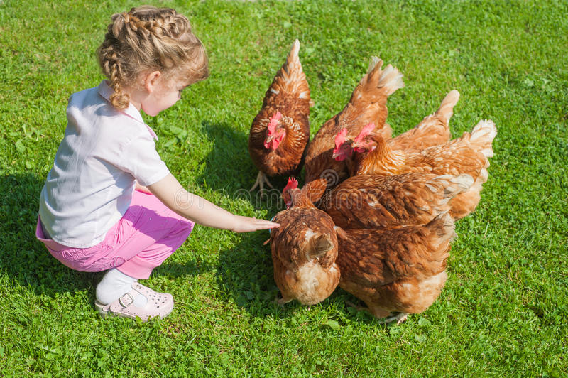 Meisjes voedende kippen stock foto
