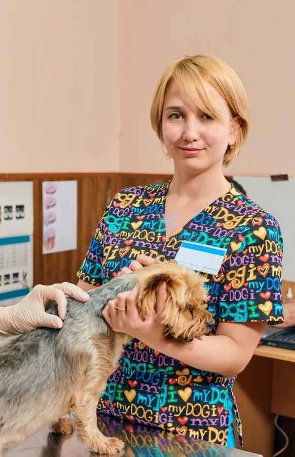 Meisjesdierenarts en hond royalty-vrije stock foto