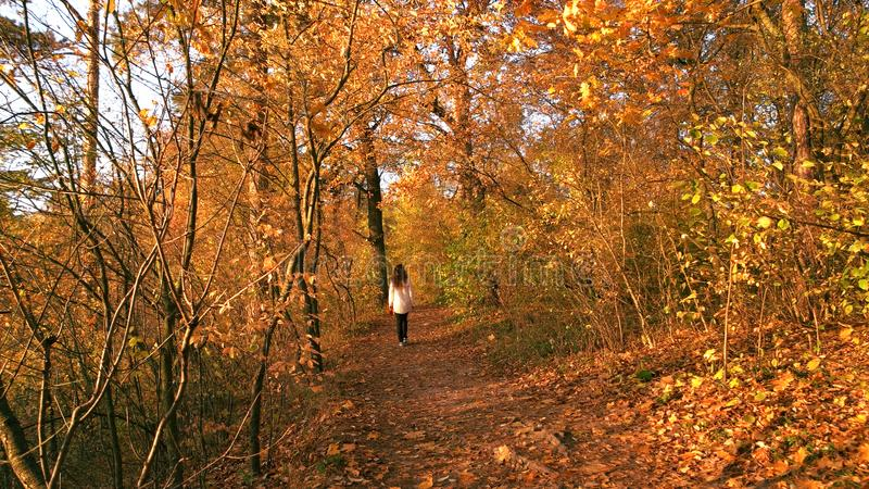 Meisjesgangen bij kleurrijk de herfstbos royalty-vrije stock foto's