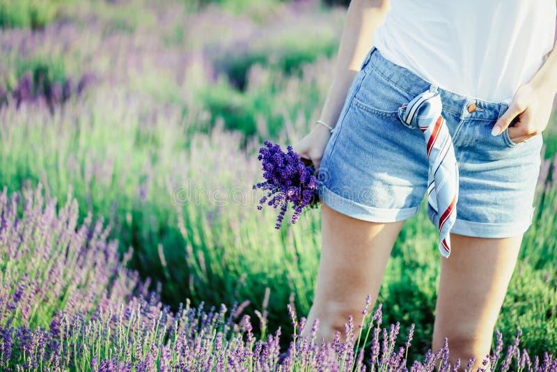 Meisjeshand die een boeket van verse mooie lavendel op lavendelgebied houden zomer stock afbeeldingen