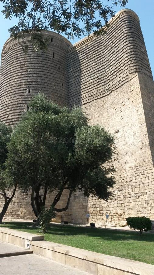 Meisjetoren en olijfboom stock afbeeldingen