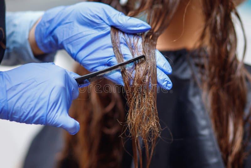 Meister in den blauen Gummihandschuhen kämmt lang dunklen verwirrten Haarkunden vorher stockbild