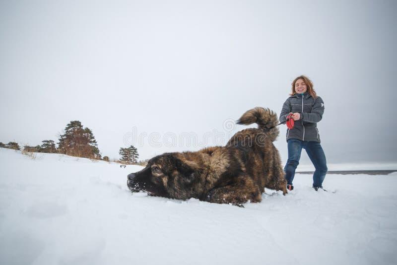 Meister und ihr ergebener kaukasischer Schäferhund, die im Winterwald spielen stockfotografie