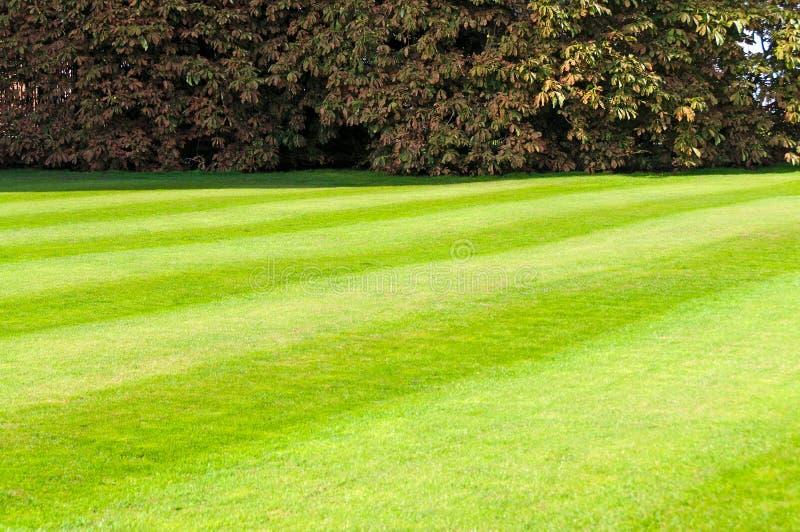 mejad grön lawn fotografering för bildbyråer