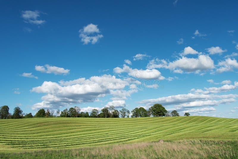 Mejat jordbruks- fält arkivbild