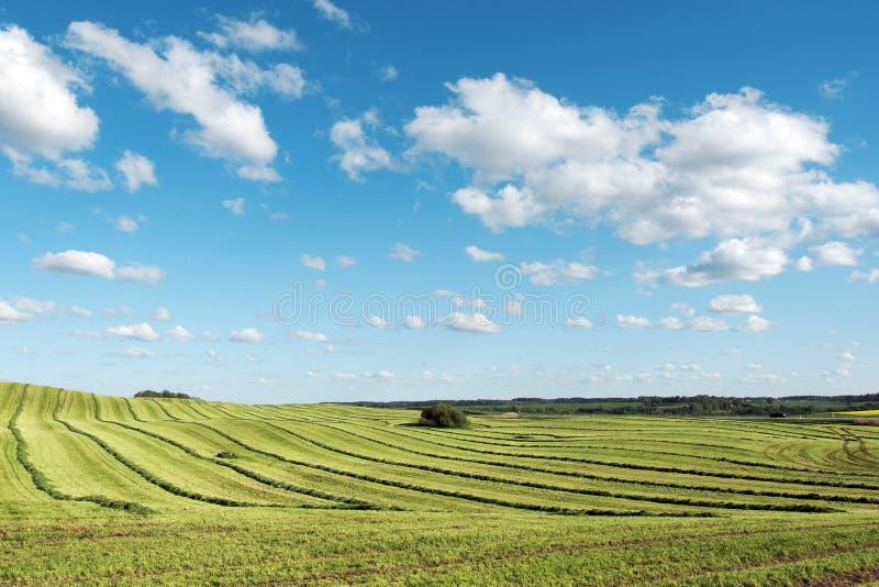Mejat jordbruks- fält fotografering för bildbyråer