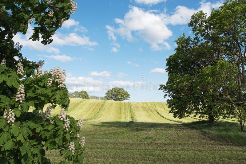 Mejat jordbruks- fält royaltyfri fotografi