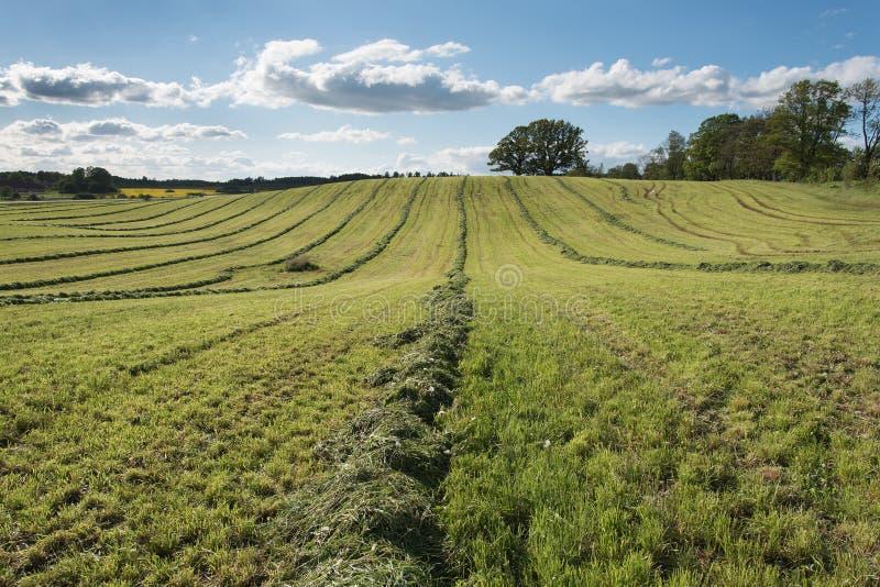 Mejat jordbruks- fält royaltyfri foto