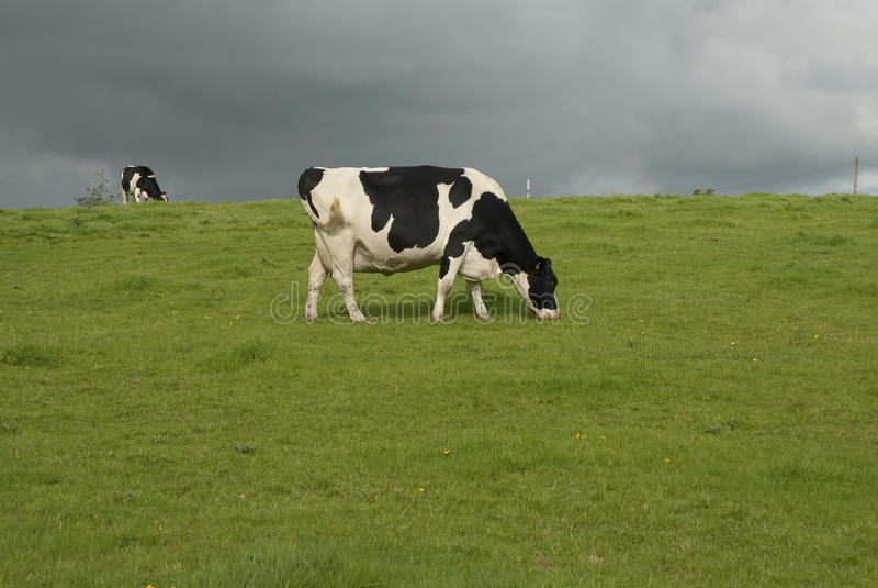 Mejerilantgården skrämmer UK royaltyfri foto