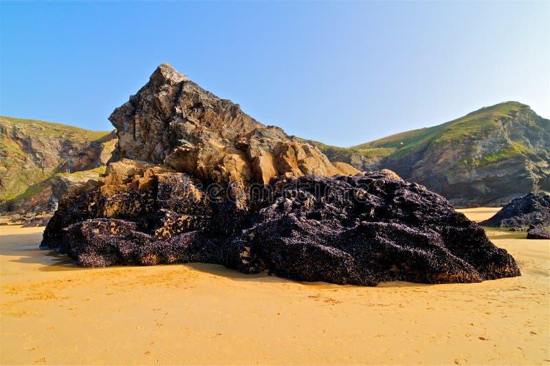 Mejillones en roca fotografía de archivo libre de regalías