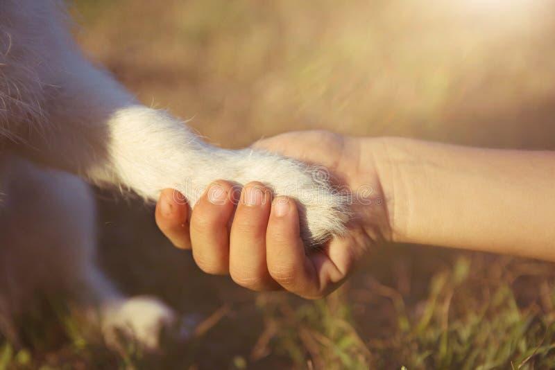 mejor amigo del perro Pequeño perrito que da la pata o el alto cinco a su dueño del niño foto de archivo libre de regalías