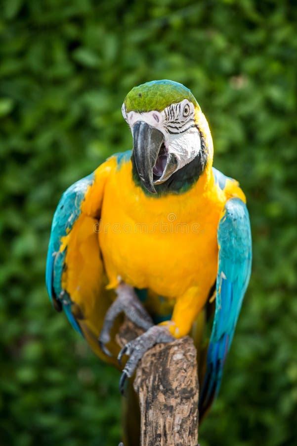 Mekaniskt säga efter fågeln royaltyfri foto