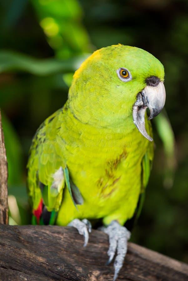 Mekaniskt säga efter fågeln arkivfoton