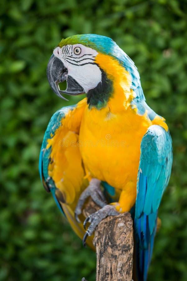 Mekaniskt säga efter fågeln royaltyfria foton