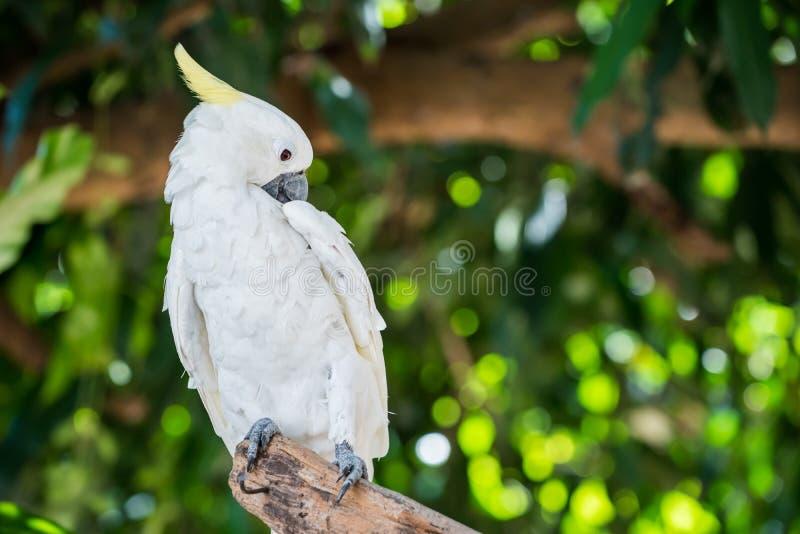 Mekaniskt säga efter fågeln royaltyfria bilder