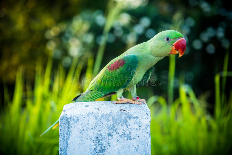Mekaniskt säga efter fågeln royaltyfri fotografi
