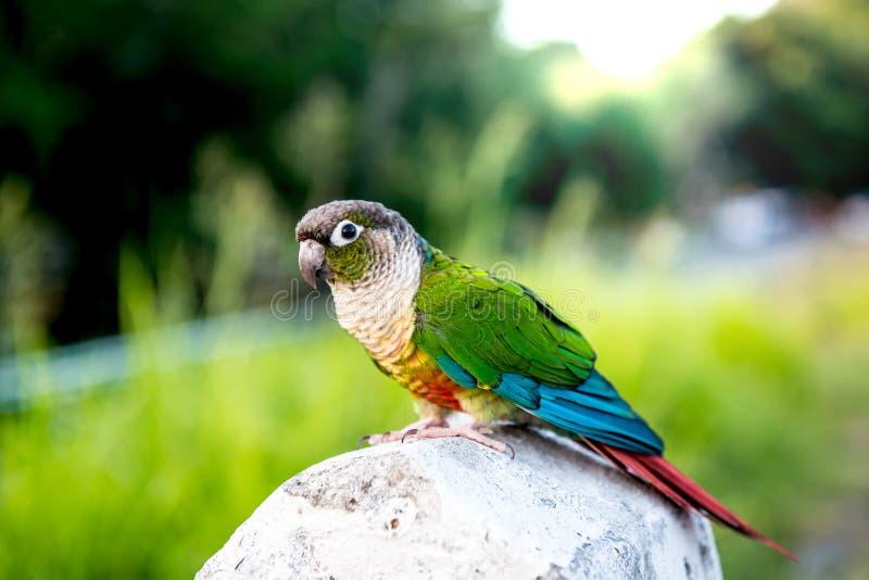 Mekaniskt säga efter fågeln royaltyfri bild