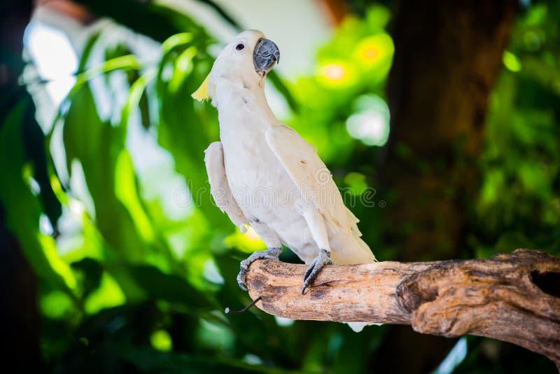 Mekaniskt säga efter fågeln fotografering för bildbyråer
