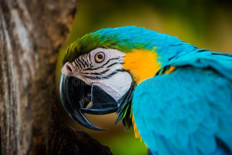 Mekaniskt säga efter fågeln arkivbilder