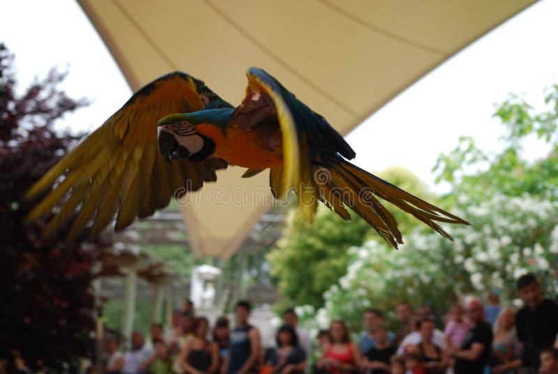 Mekaniskt säga efter i flykten, den exotiska fågeln arkivfoton