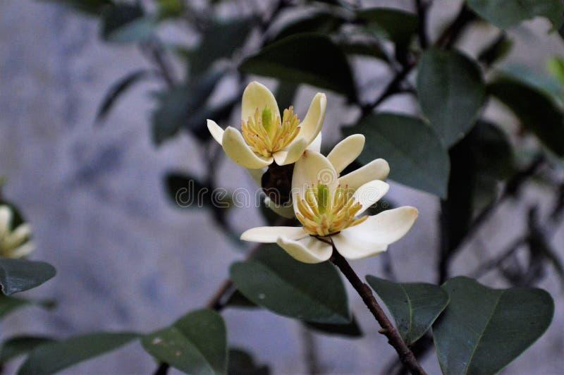 Mekar Bunga royalty-vrije stock foto's