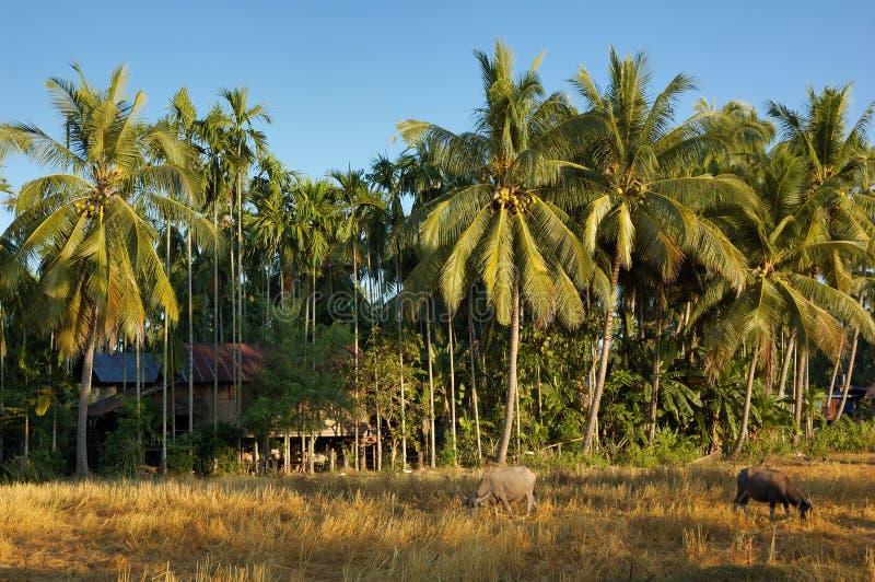Mekong river - Islands stock images