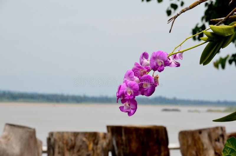 Mekong rzeki punkt widzenia zdjęcie royalty free