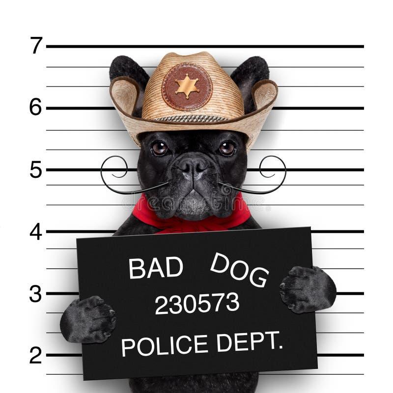 Meksykański mugshot pies obrazy royalty free