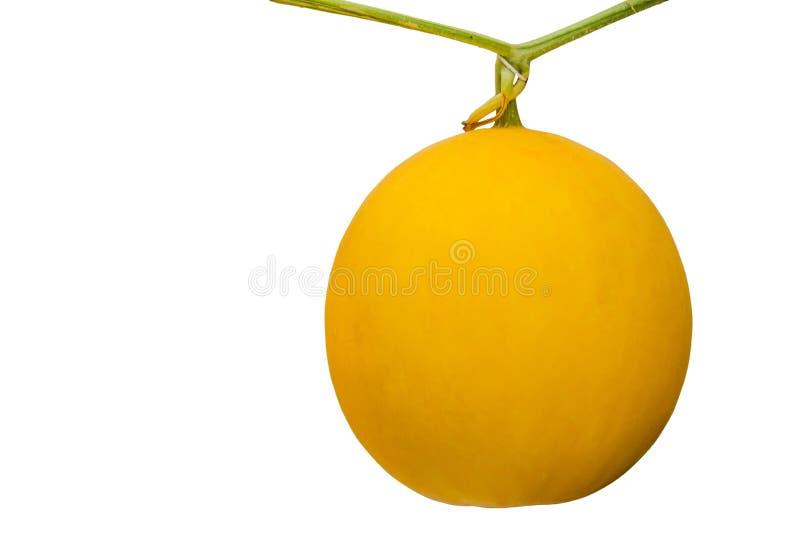 Melão amarelo do cantalupo isolado no fundo branco com clippi imagens de stock royalty free