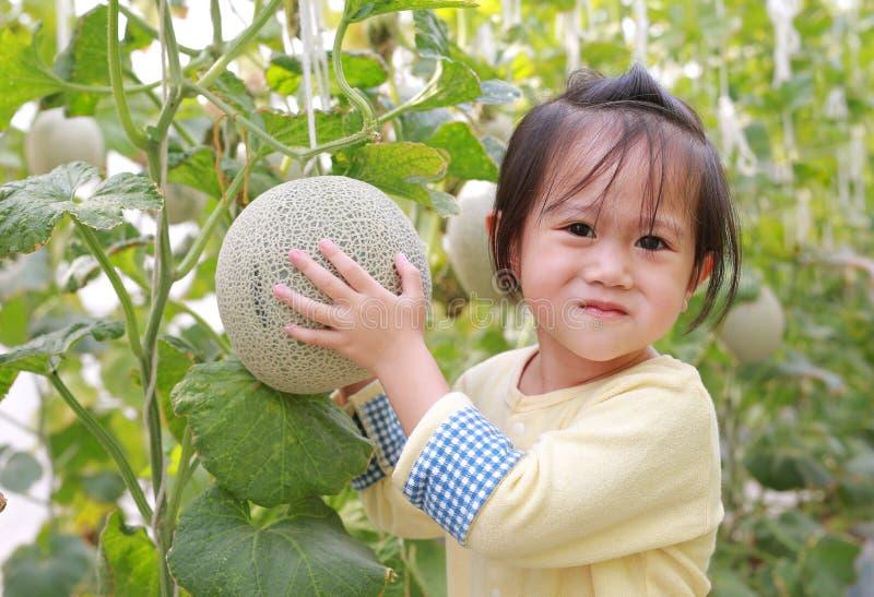 Melão da terra arrendada da menina da criança na exploração agrícola do melão da estufa fotografia de stock