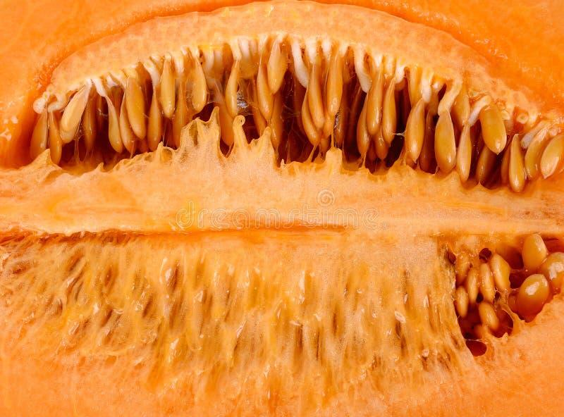 Melão interno com fundo da semente imagem de stock