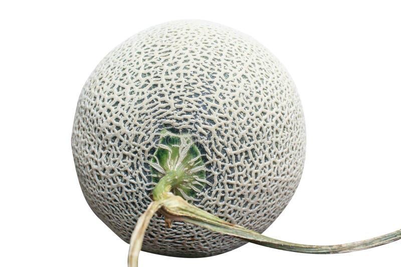 Melón aislado, redes verdes de la roca del melón aisladas en el fondo blanco imagen de archivo libre de regalías