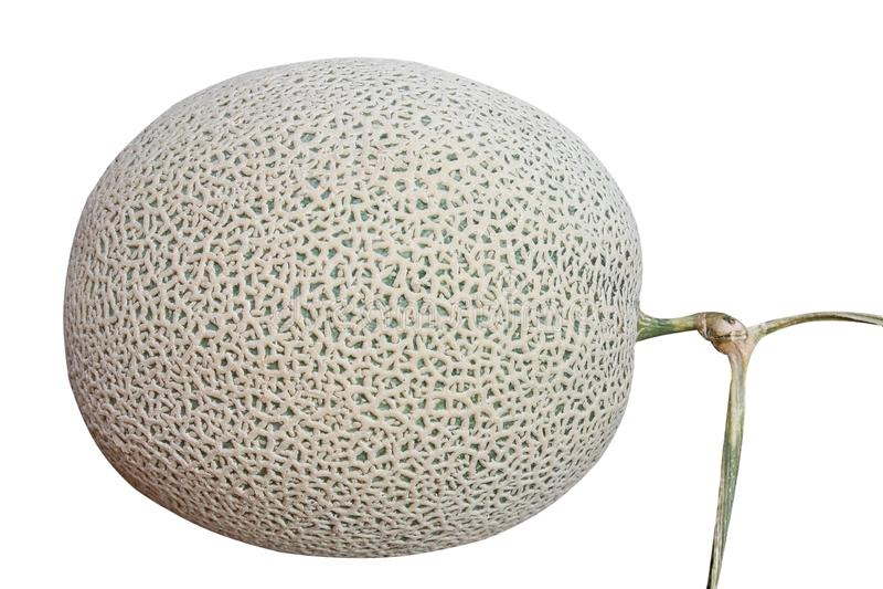 Melón aislado, redes verdes de la roca del melón aisladas en el fondo blanco fotografía de archivo libre de regalías