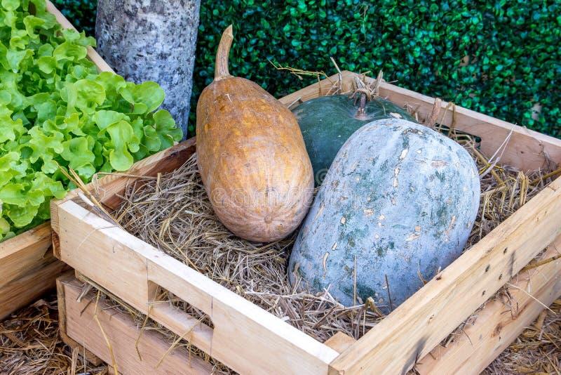 Melón de invierno verde y marrón en una caja de madera con todavía de las verduras el fondo de la vida foto de archivo