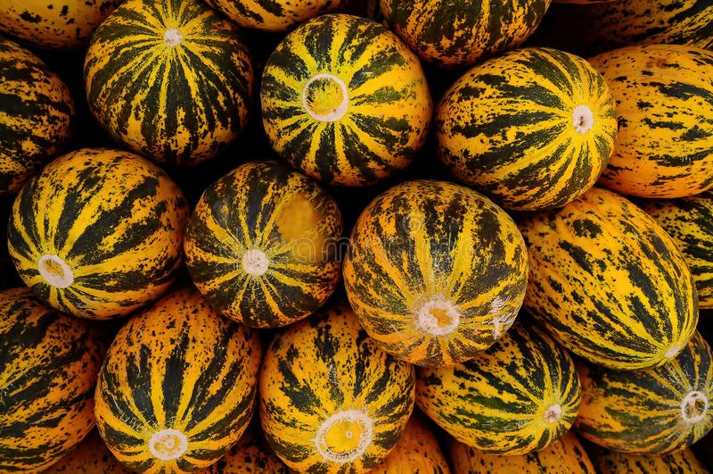 Melões frescos e saborosos frescos imagem de stock