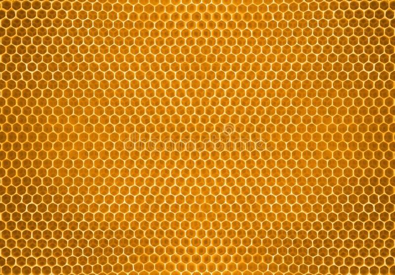 Mel da abelha no fundo do teste padrão do favo de mel imagens de stock