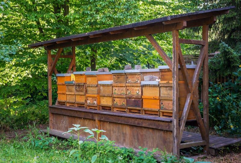 Mel de madeira do jardim da exploração agrícola da casa da colmeia da abelha imagem de stock