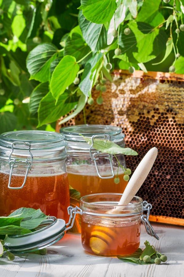 Mel em um frasco e em uma árvore do favo de mel e de Linden fotos de stock royalty free