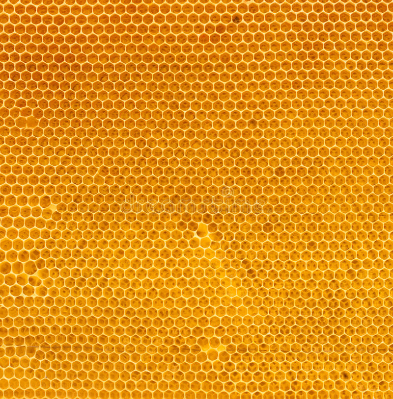 Mel fresco na textura natural do pente fotografia de stock royalty free