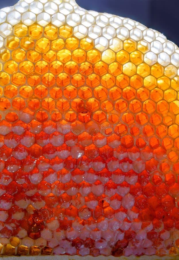 Mel fresco nos favos de mel imagens de stock royalty free