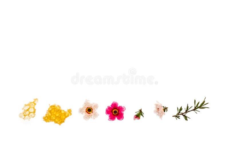 Mel orgânico puro do manuka com as flores do rosa e as brancas do manuka no fundo branco imagens de stock royalty free