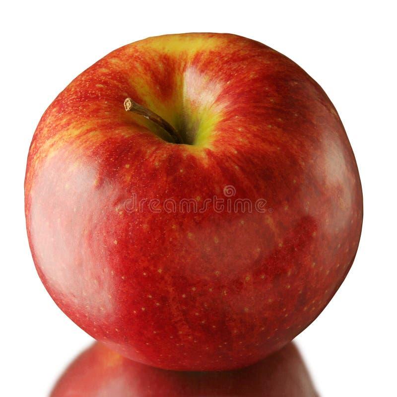 Mela rossa, bella, succosa, saporita molto grande immagine stock libera da diritti