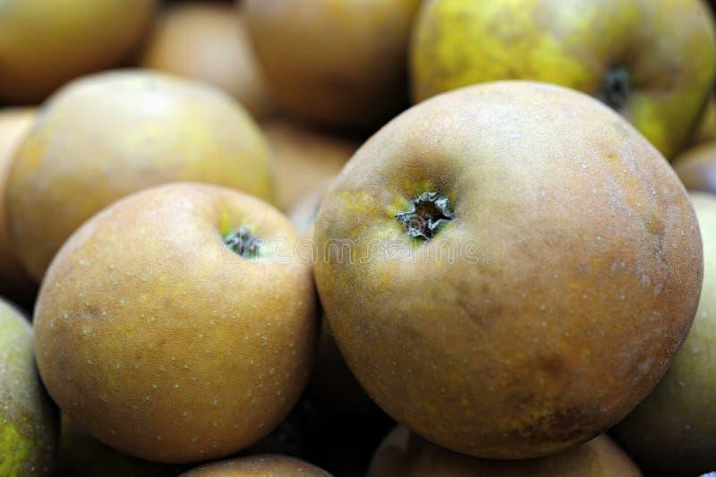 Mela ruggine organica e raccolta a mano di cibo di Egremont fotografia stock libera da diritti