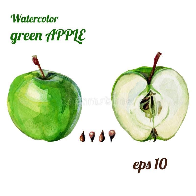 Mela verde dell'acquerello illustrazione di stock