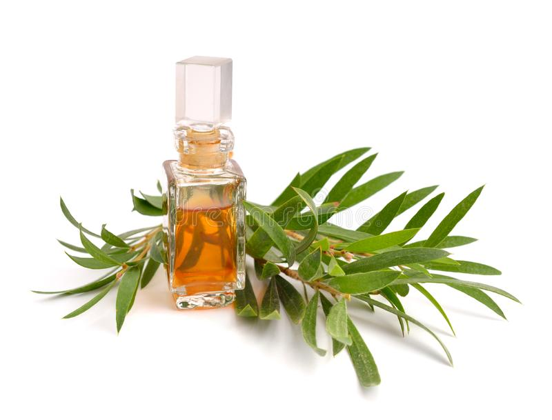 Melaleuca essential oil in the pharmaceutical bottle with twigs. Isolated on white background royalty free stock images
